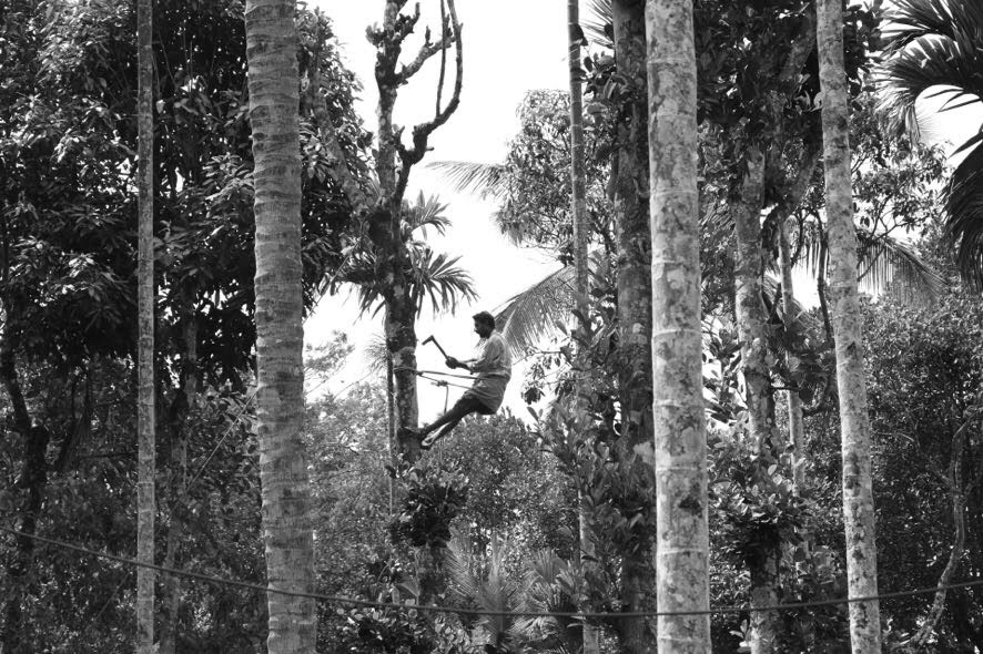 b n w guy in tree.jpg