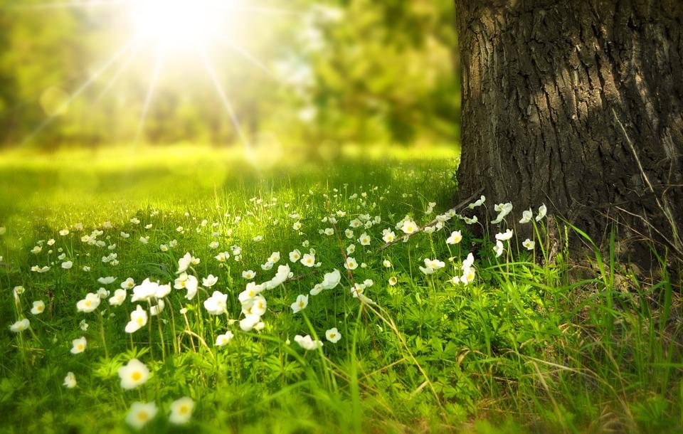 spring-276014_960_720.jpg