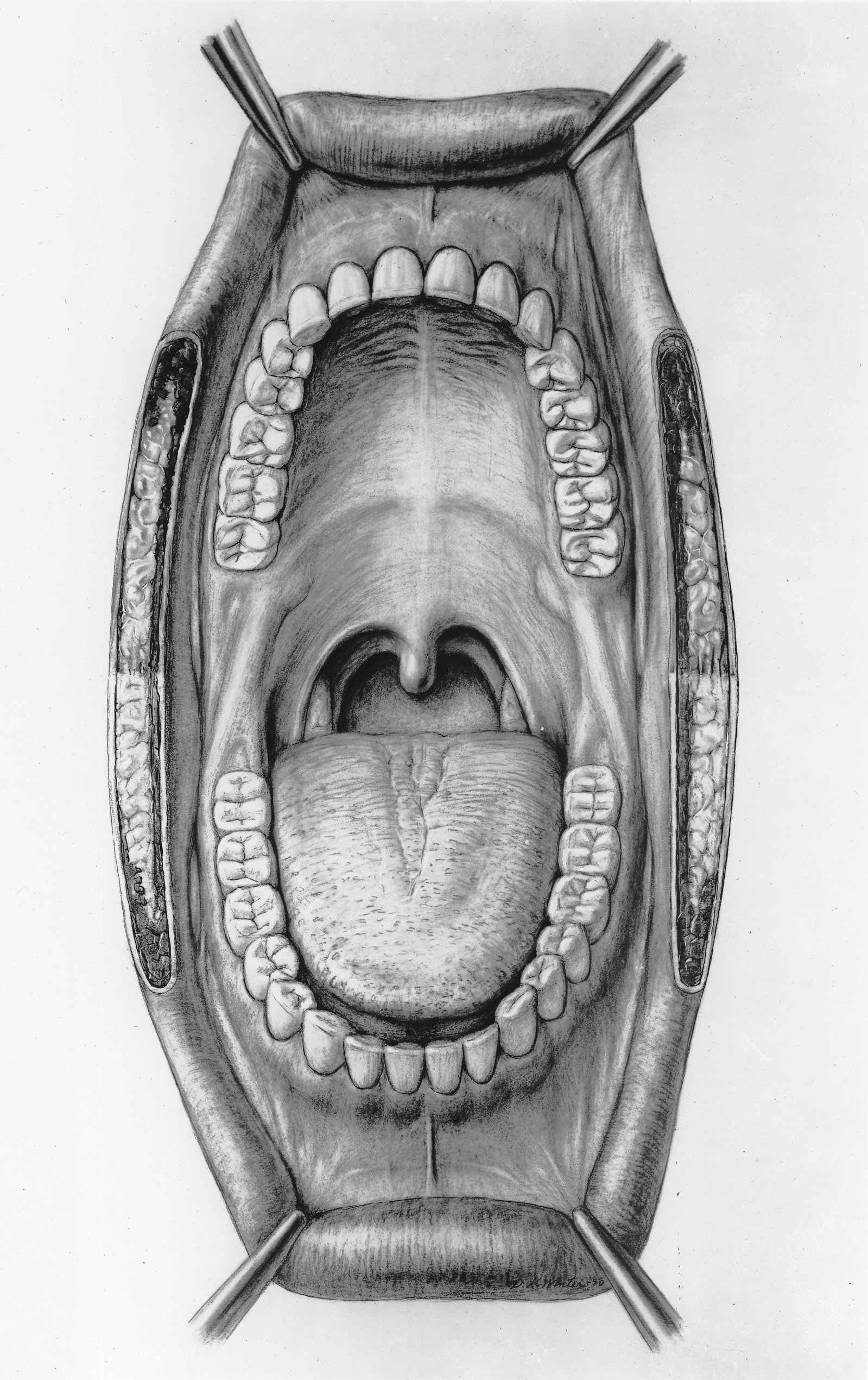 Mouth_illustration-Otis_Archives.jpg