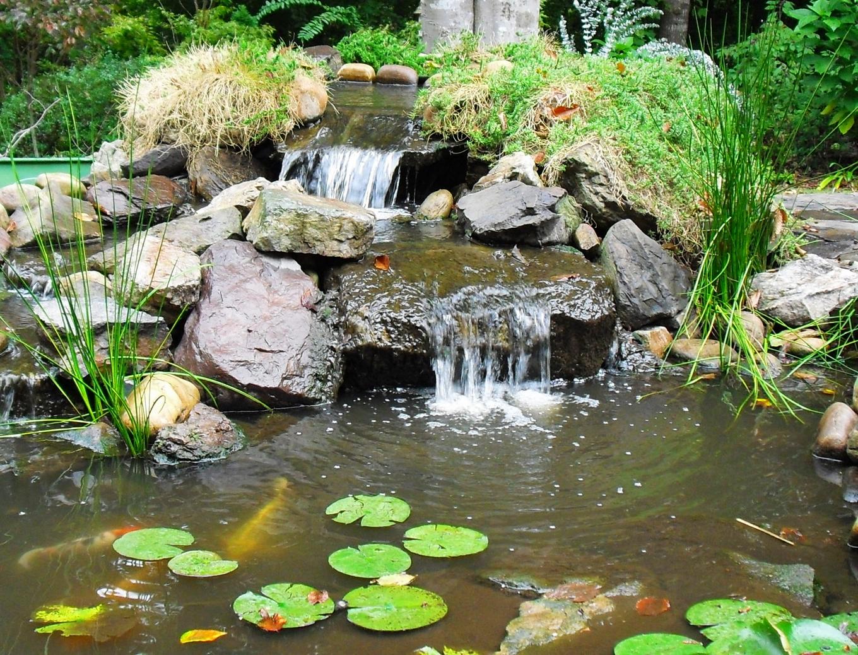 Water cascades into a koi pond
