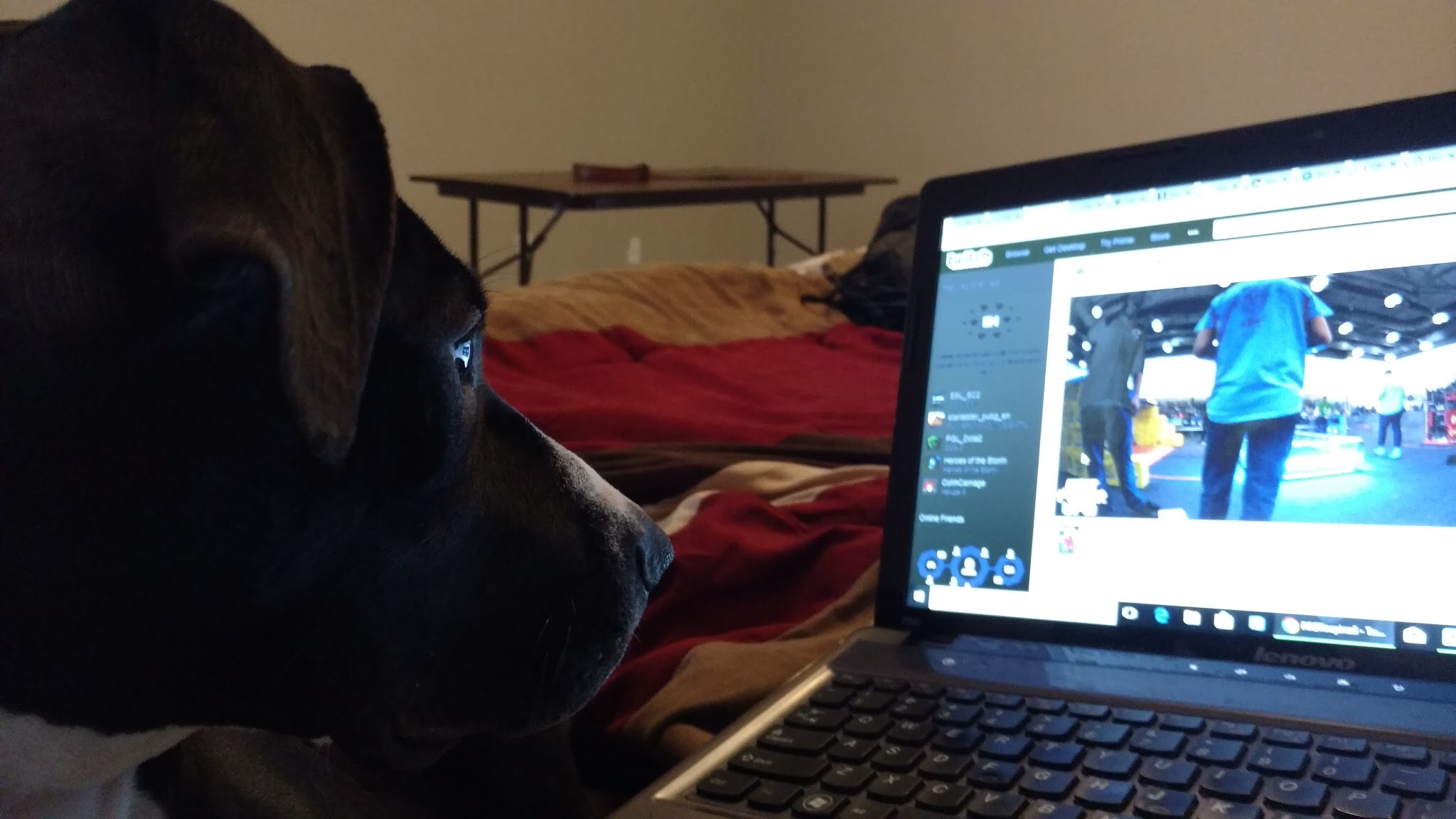 "Shop Dog ""Daisy"" keeps up with the alliance selection from home."