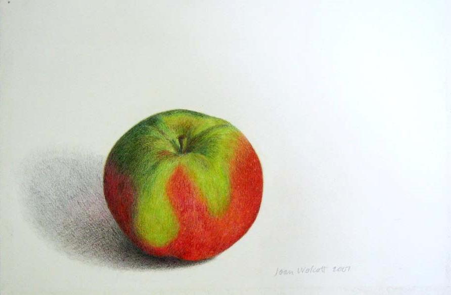 Joan Wolcott,  Apple , colored pencil, $200  SOLD