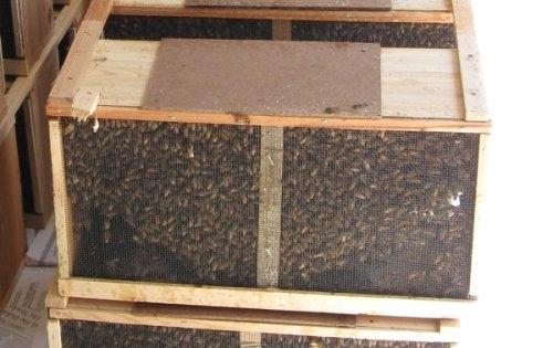 honey_bees.3lb_georgia_package.00.jpg