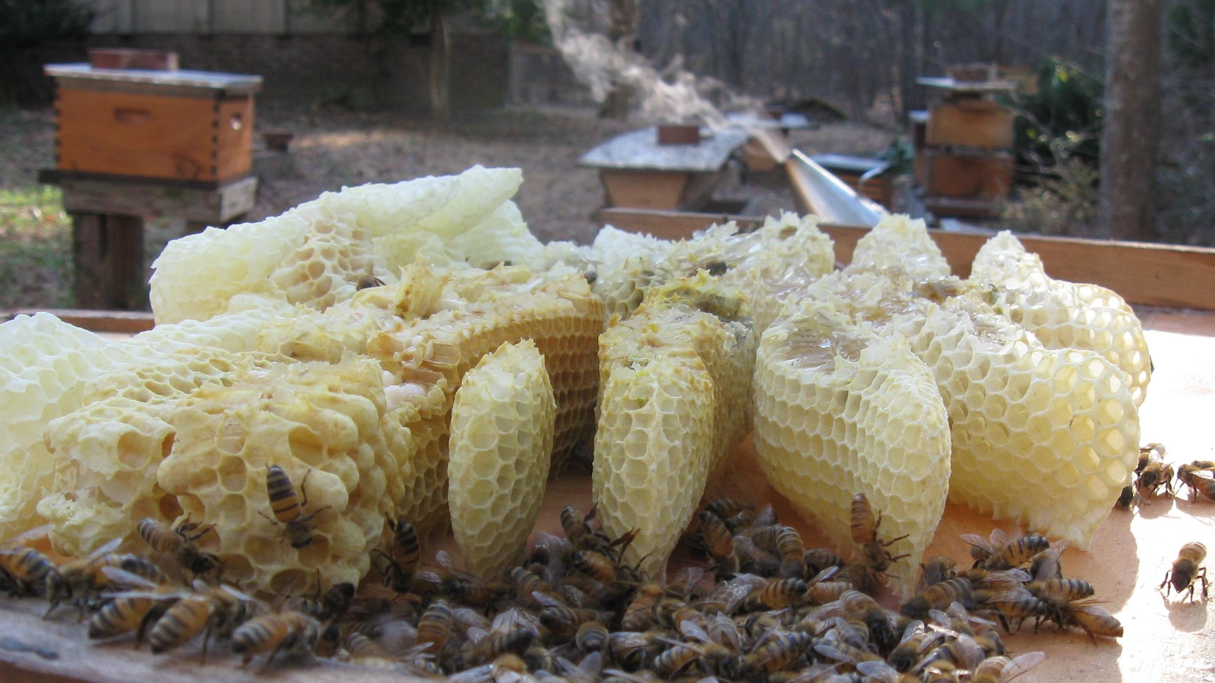 Bees, Burr-comb, and Smoker (c) 2013 The Carolina Bee Company