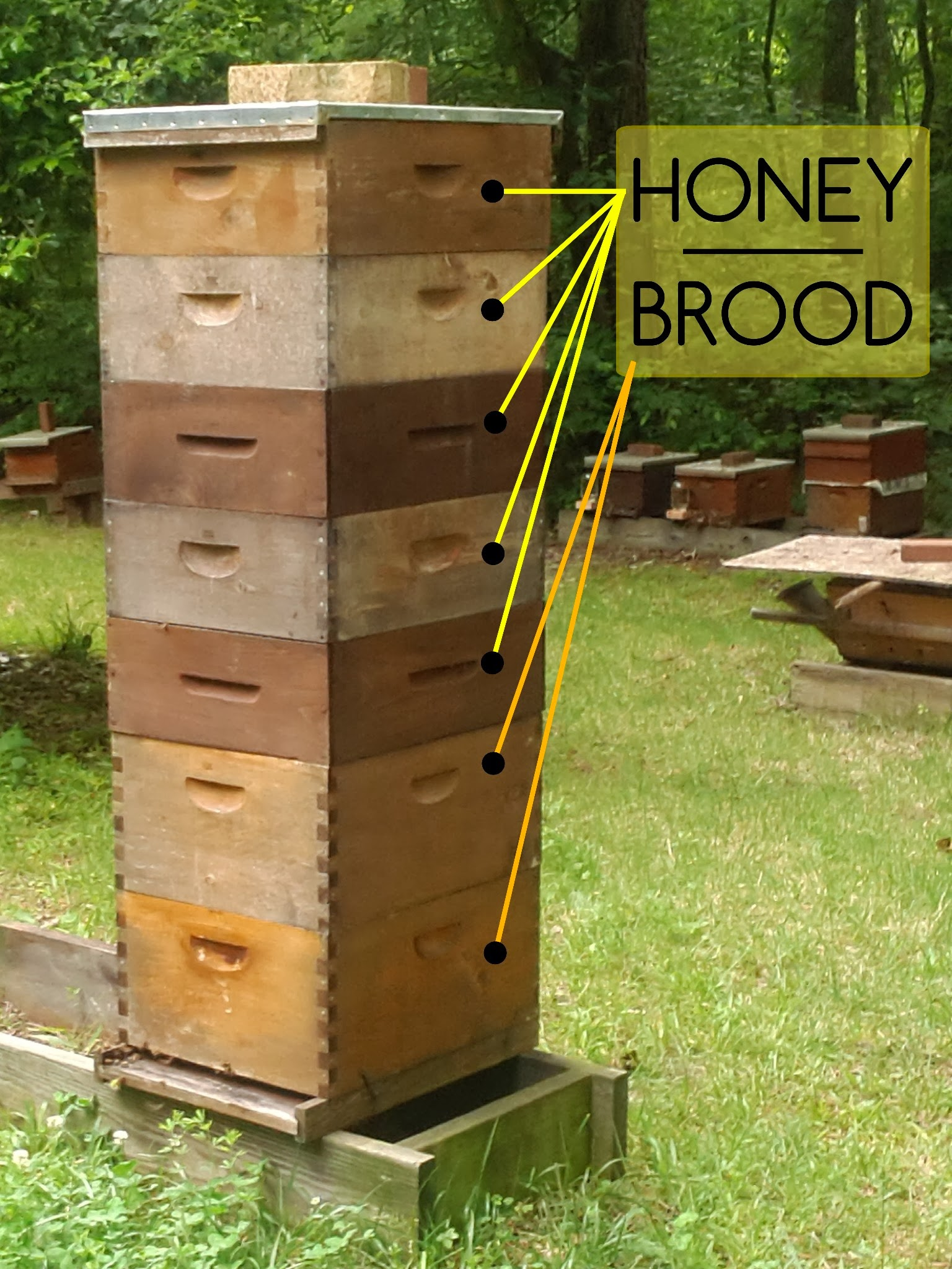 Langstroth hive. And a big one! This hive from early 2013 did fantastically!