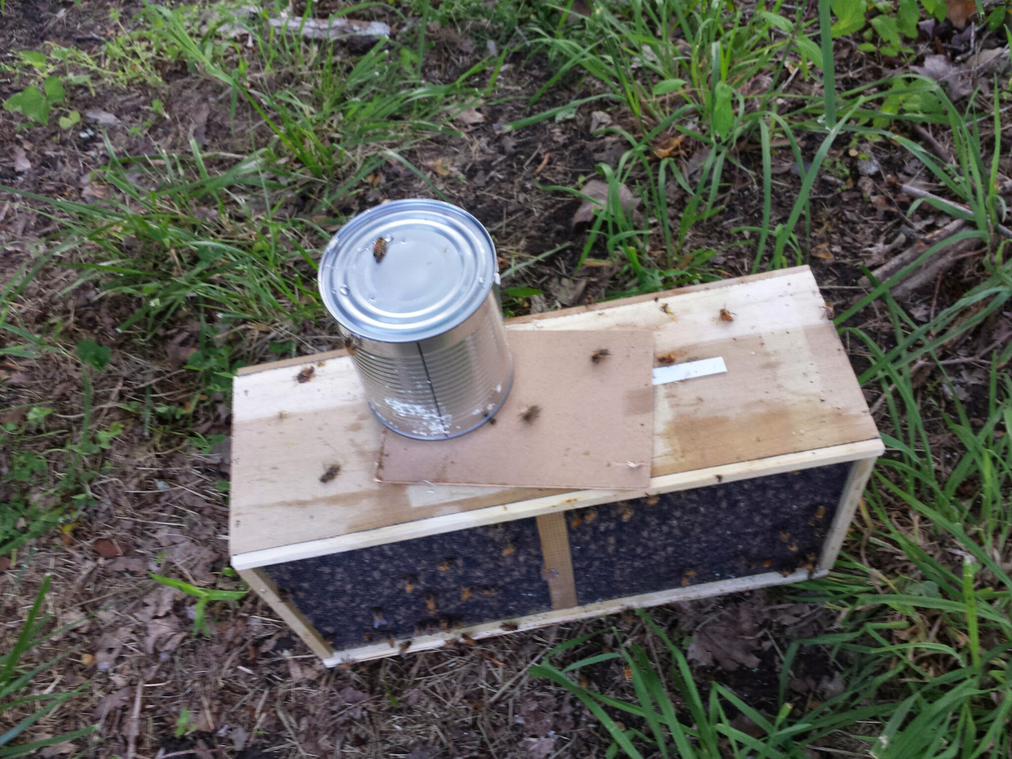 Pulled the can out and set the wooden cover or shield over the now wide-open package. We want to keep the bees inside for now.