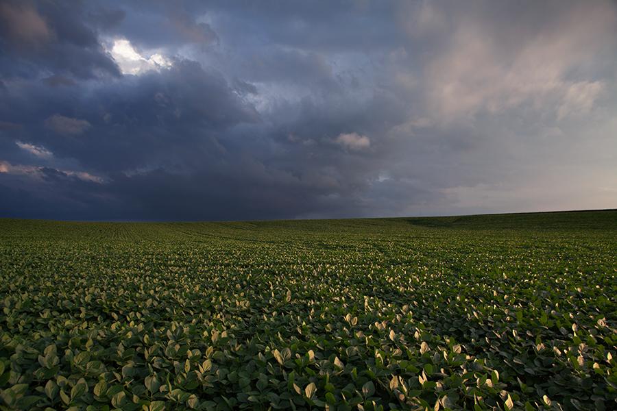 farm field in eastern Nebraska
