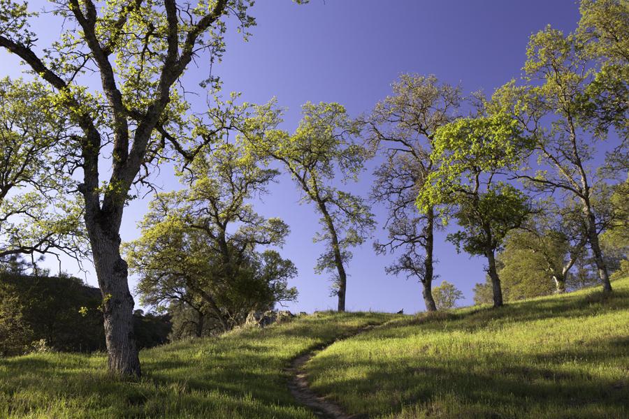 trail in central California