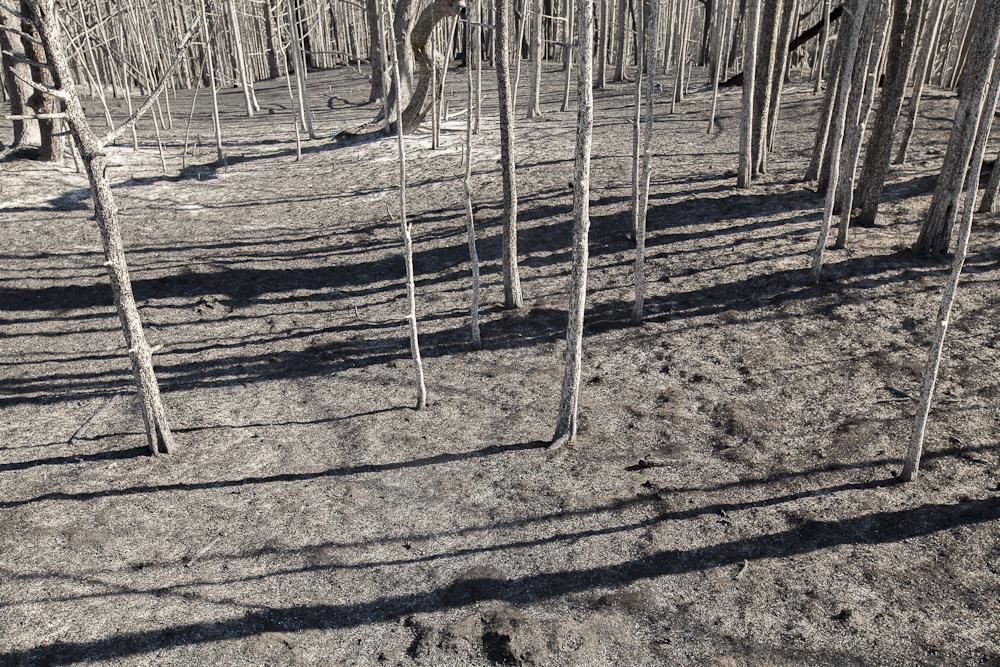 burned forest along the Niobrara River in Nebraska