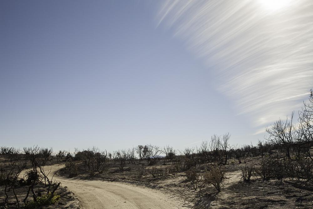 aftermath of a fire near Anza Borrego State Park California