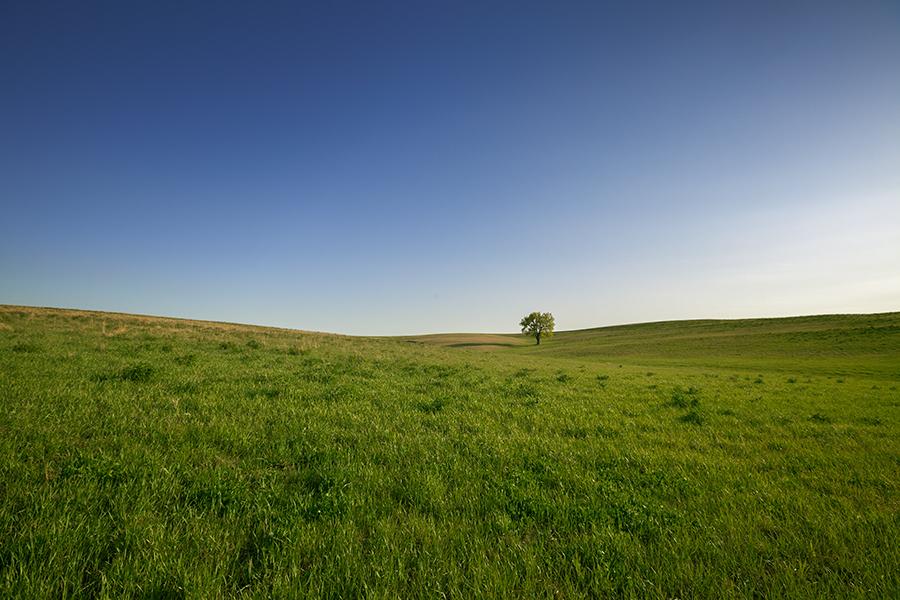 prairie in eastern Nebraska