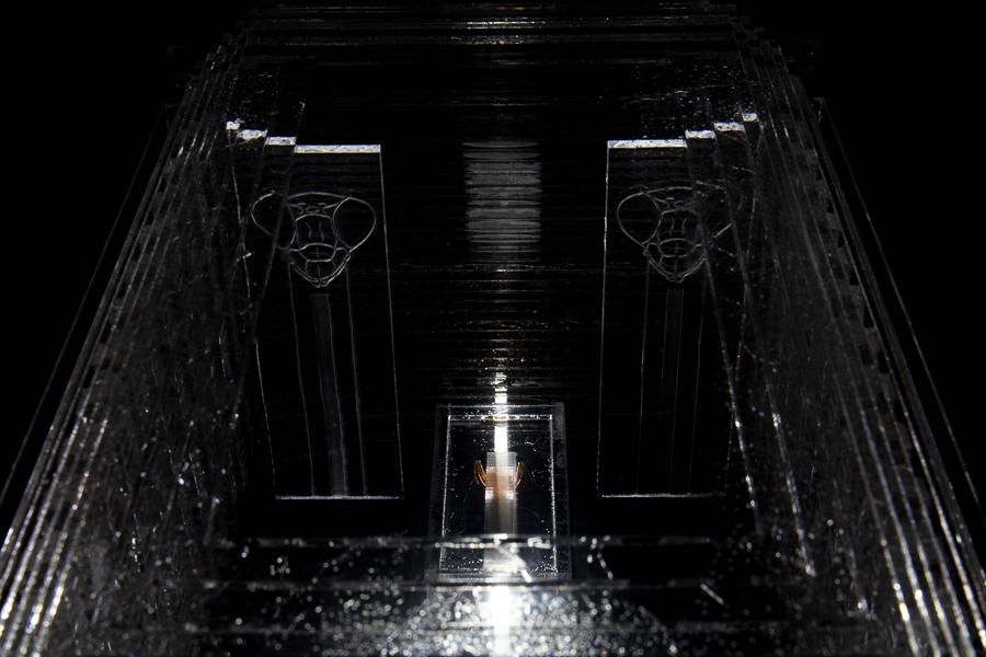 Mantis Tomb