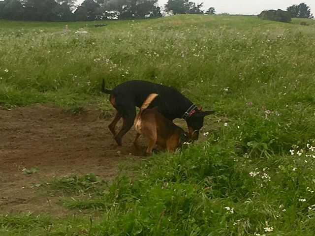Chloe and Mushroom sharing a hole before the rain comes down.