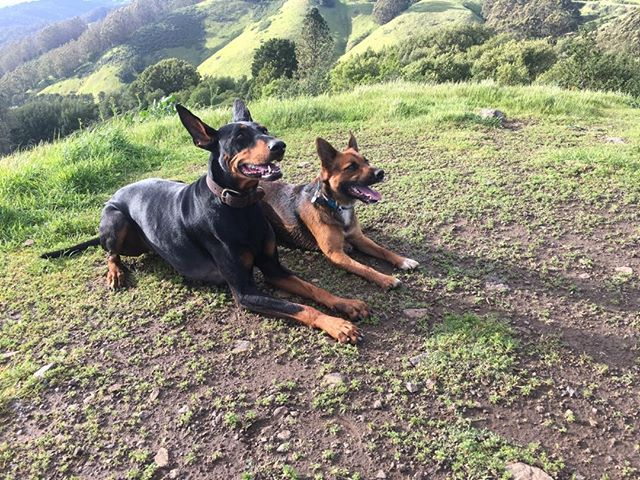 Chloe and Shroom enjoying their post rain hike.