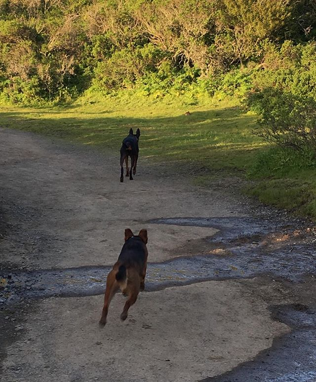 Tale of two hunters.  One carefully stalks her way closer, whereas the other makes a mad dash for a quick chase.