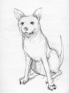 dog-stay.jpg
