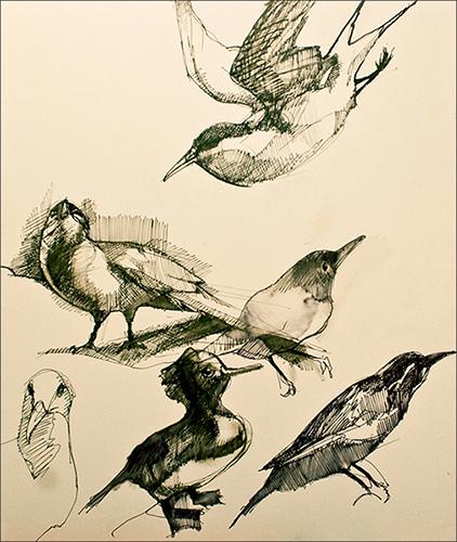 Journal Bird Studies