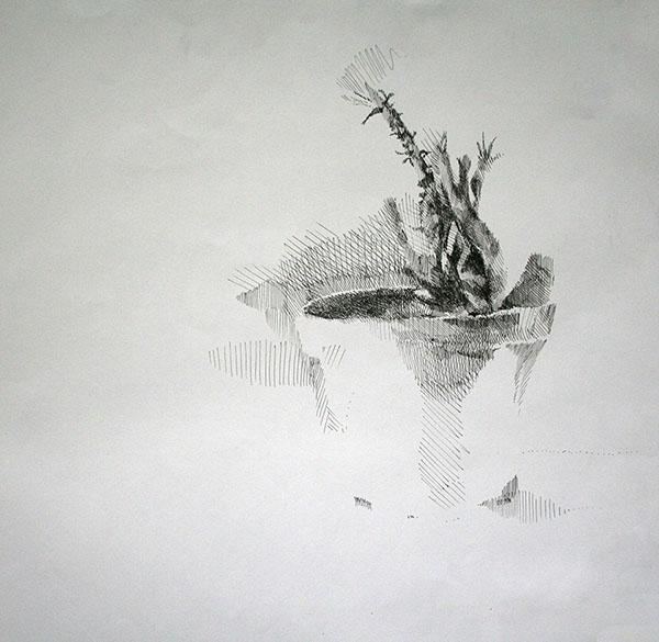 X-Hatchedplant.jpg