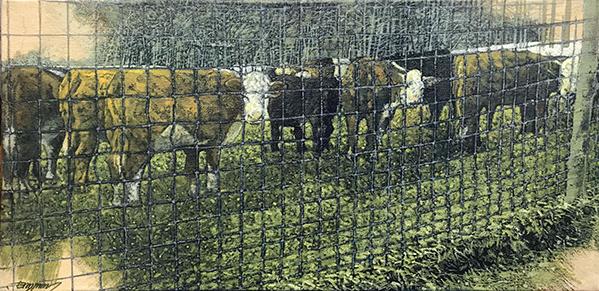 The Herd SS.jpg