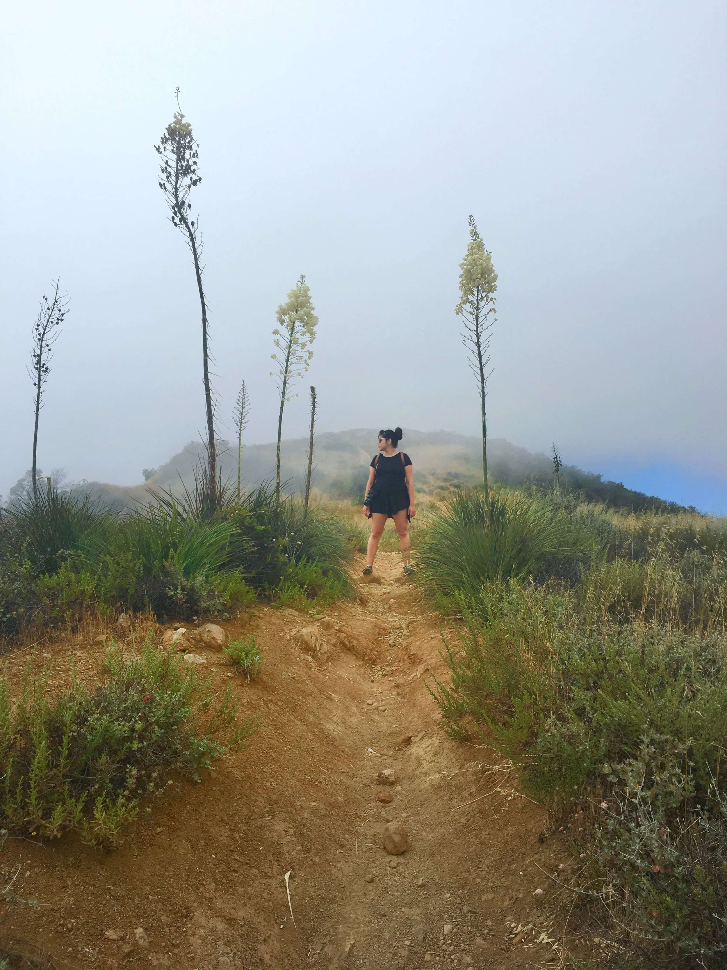 Paseo Miramar Hiking Trail_PipelinePepperBlog