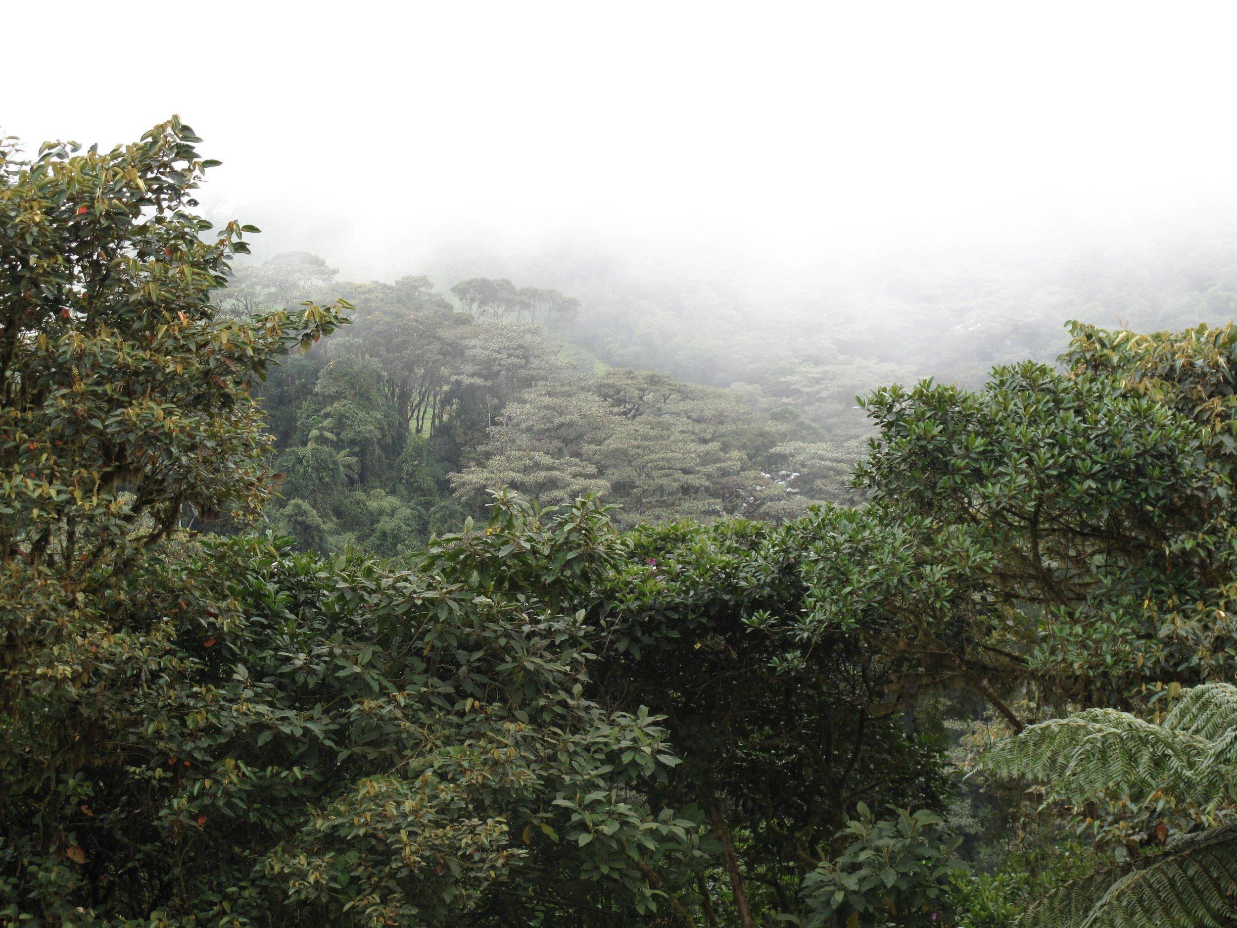 cloudforestview.jpg