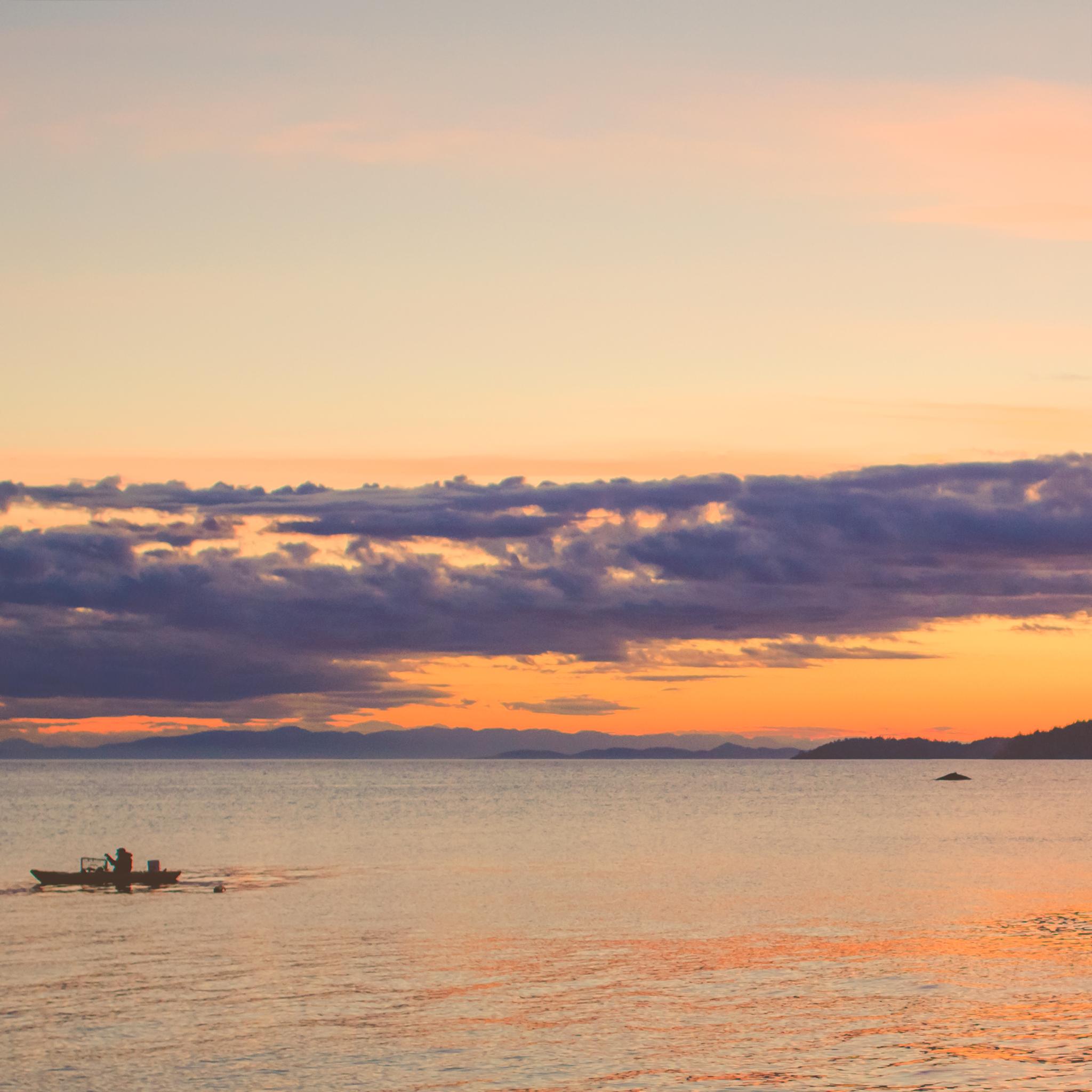 humpback whales, davis bay pier, sunshine coast bc, jennifer picard photography