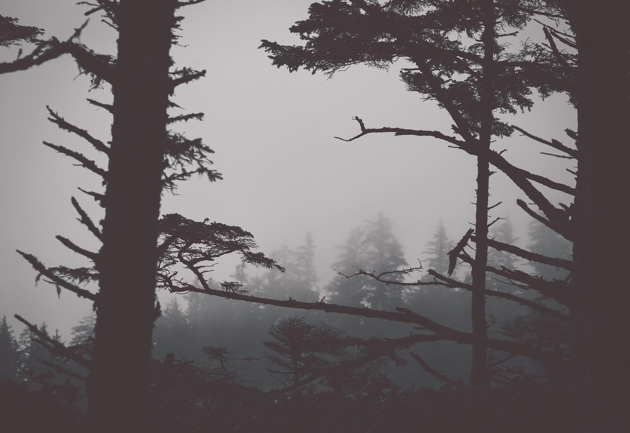 moody oregon coast, black and white, jennifer picard photography, travel photographer