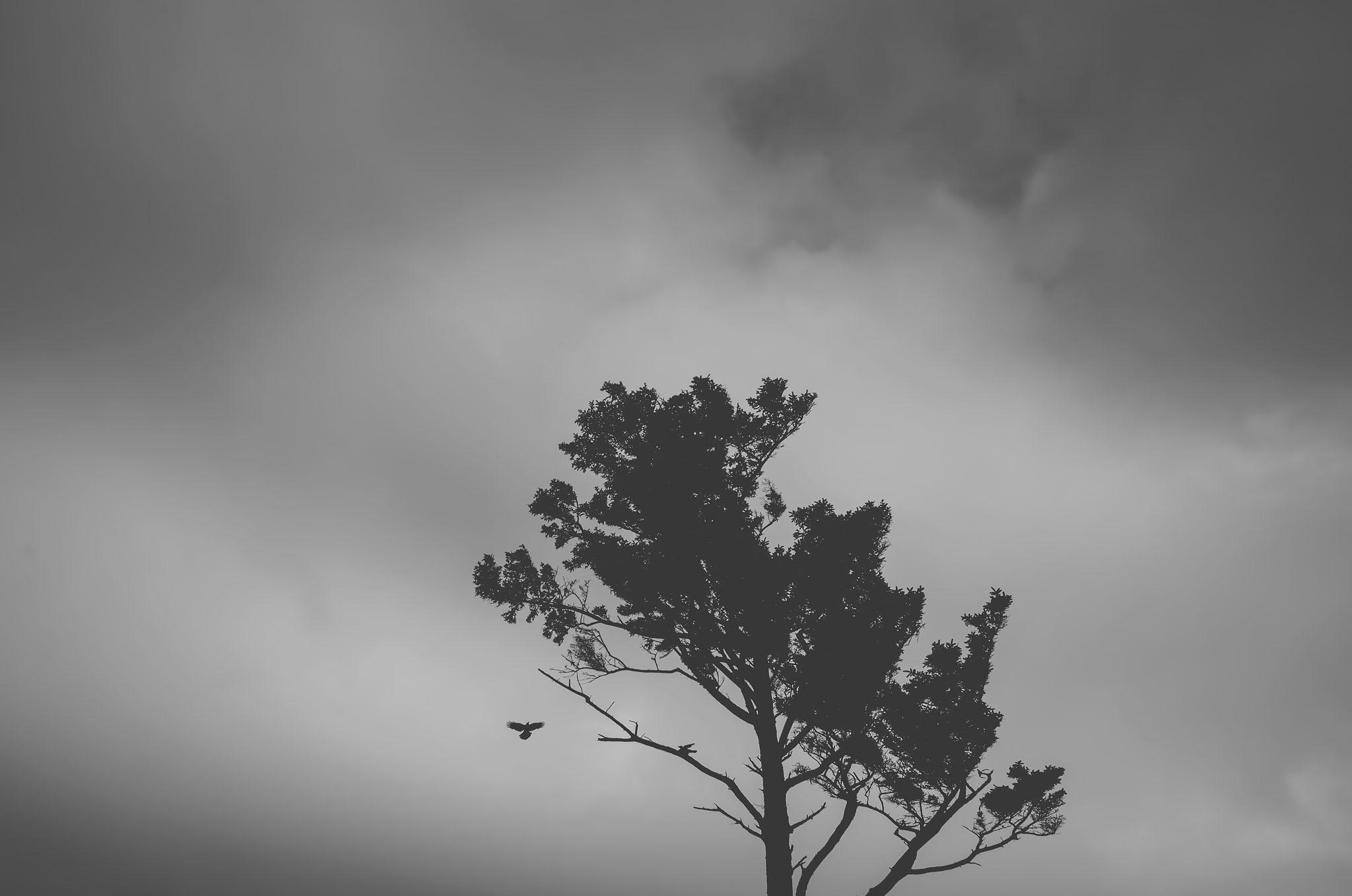 oregon coast, black and white, travel photographer, jennifer picard photography