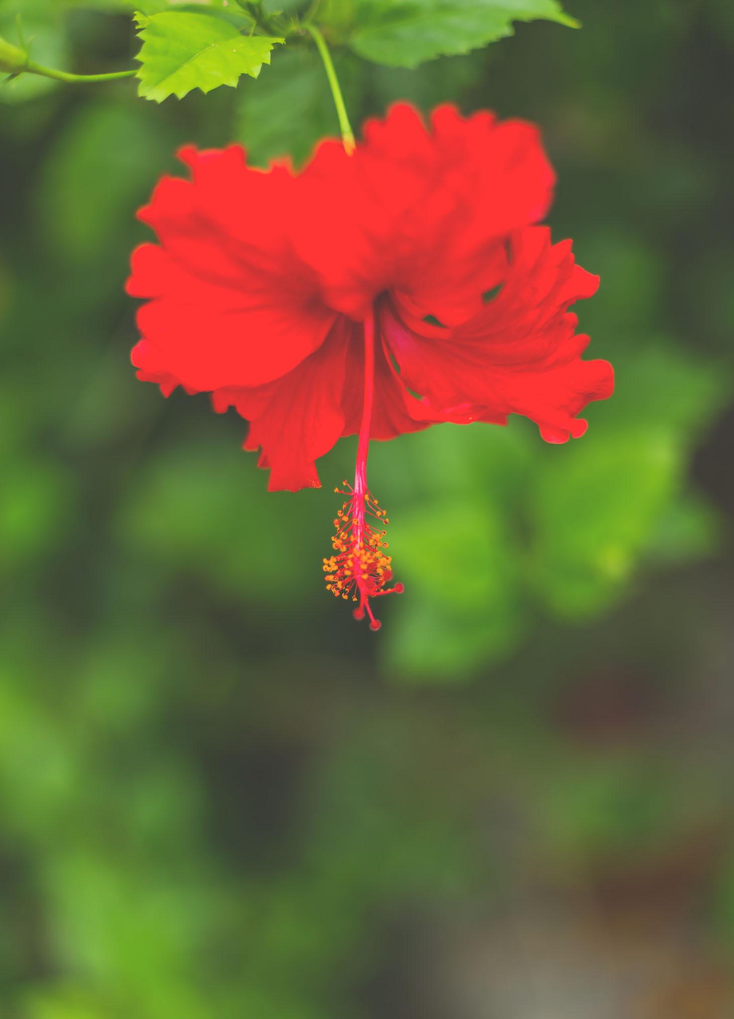 akumal, mexico, travel photography, jennifer picard photography