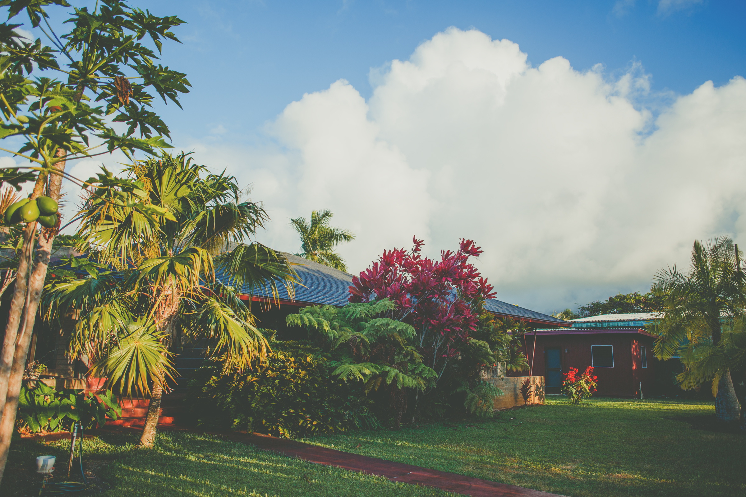 IMG_2252-KAUAI-HAWAII-JENNIFER-PICARD-PHOTOGRAPHY.jpg
