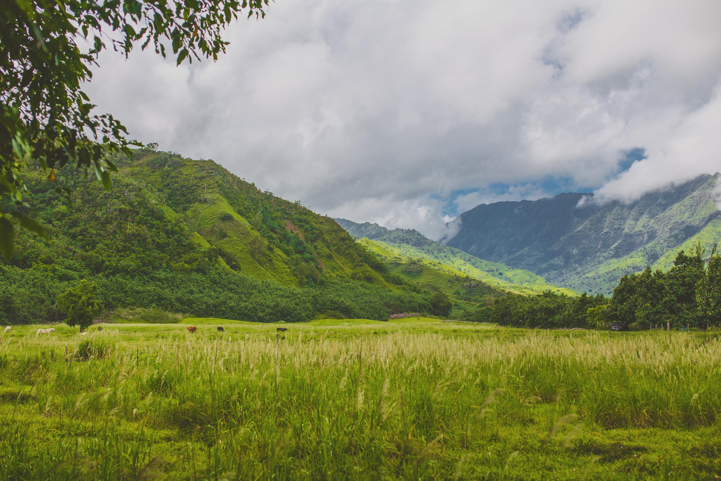 IMG_2381-KAUAI-HAWAII-JENNIFER-PICARD-PHOTOGRAPHY.jpg