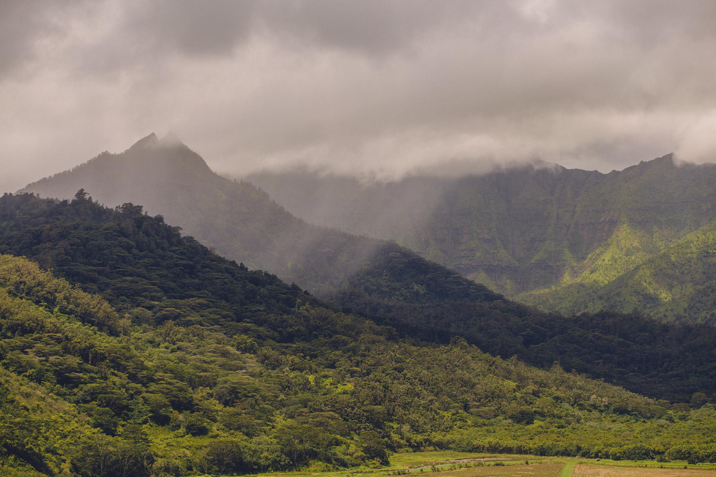 IMG_2421-KAUAI-HAWAII-JENNIFER-PICARD-PHOTOGRAPHY.jpg