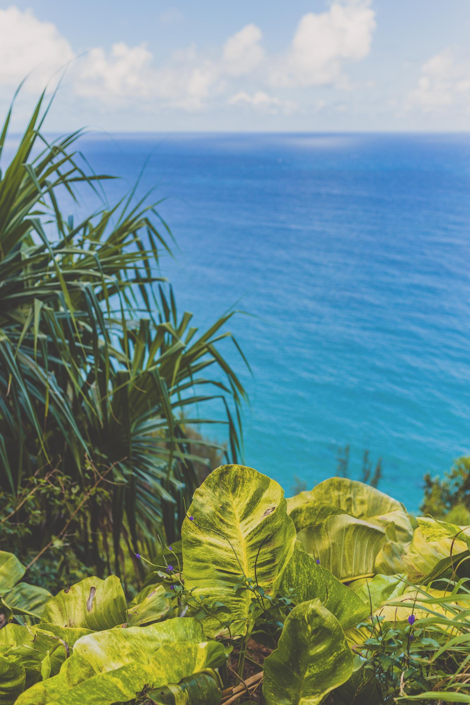 IMG_2566--KAUAI-HAWAII-JENNIFER-PICARD-PHOTOGRAPHY.jpg
