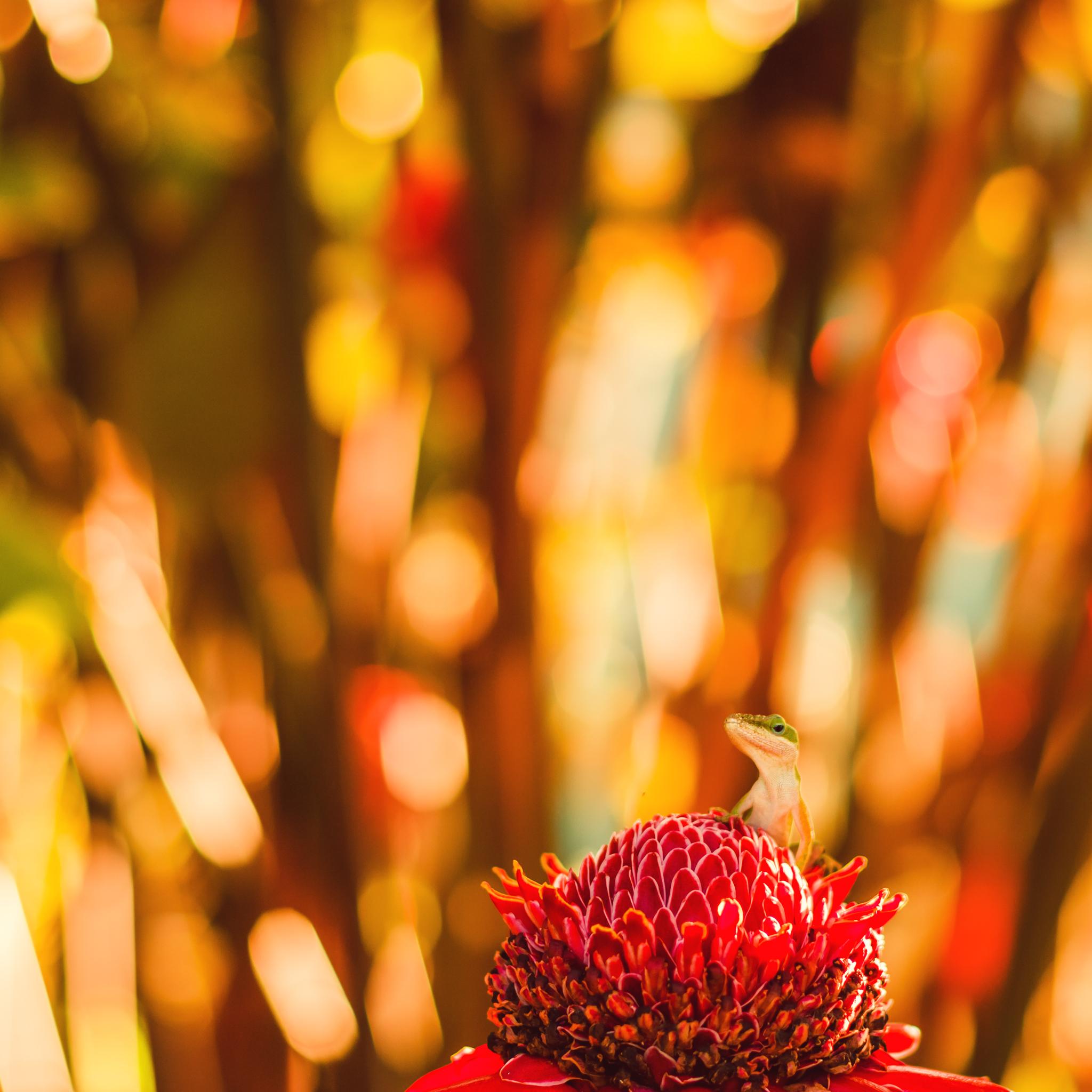 IMG_0206-WEB-KAUAI-HAWAII-JENNIFER-PICARD-PHOTOGRAPHY.jpg