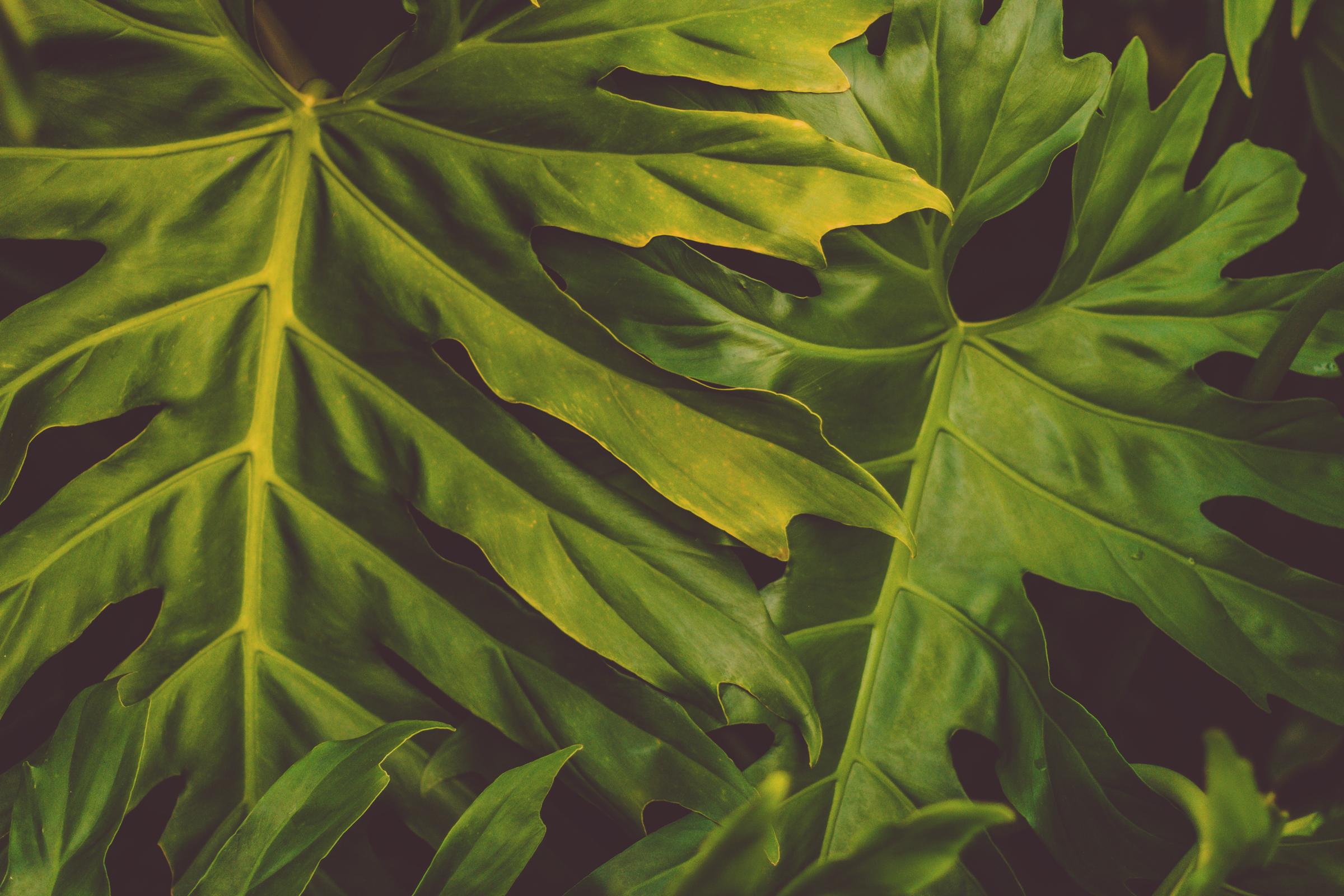 IMG_0313--KAUAI-HAWAII-JENNIFER-PICARD-PHOTOGRAPHY.jpg