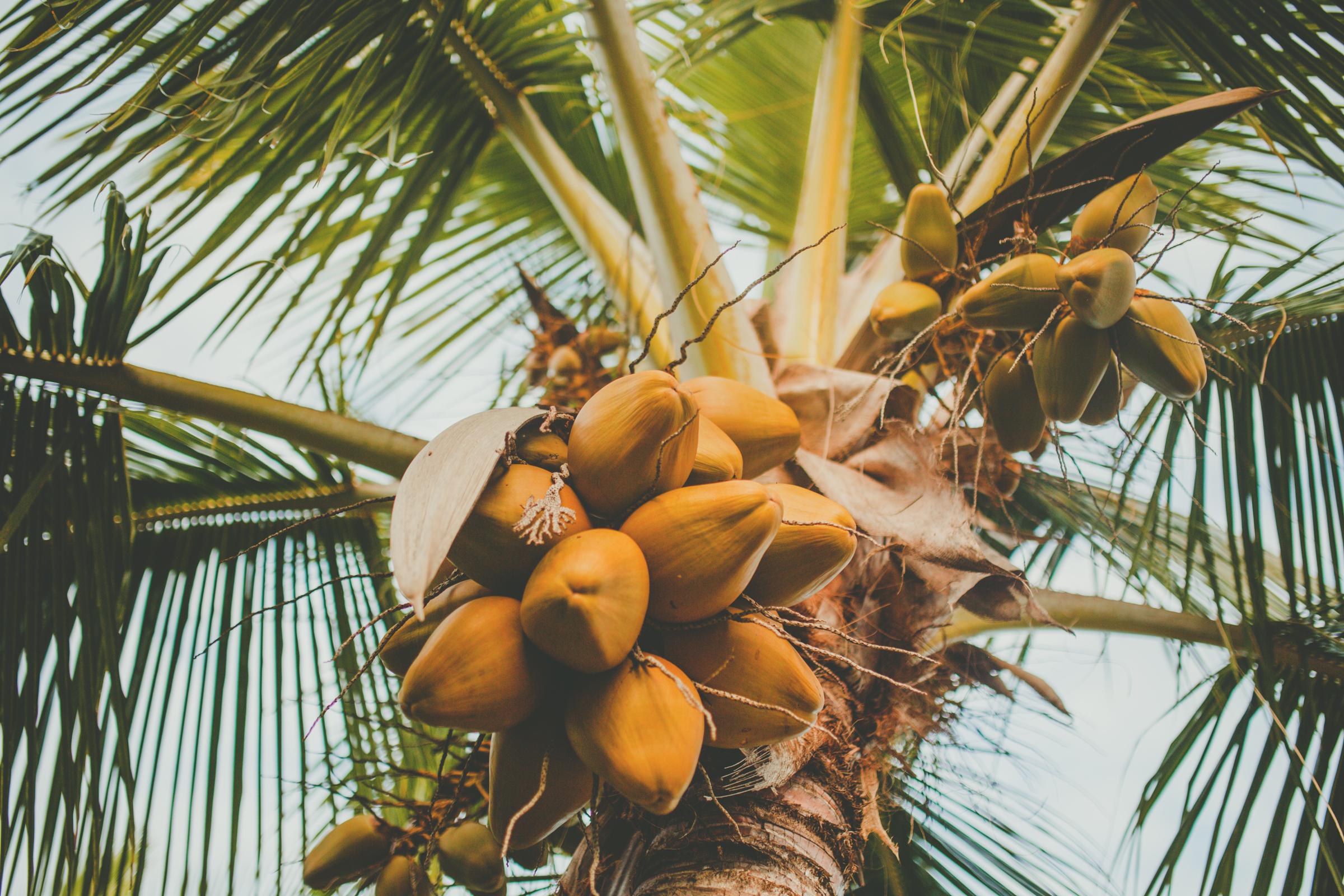 IMG_2995--KAUAI-HAWAII-JENNIFER-PICARD-PHOTOGRAPHY.jpg