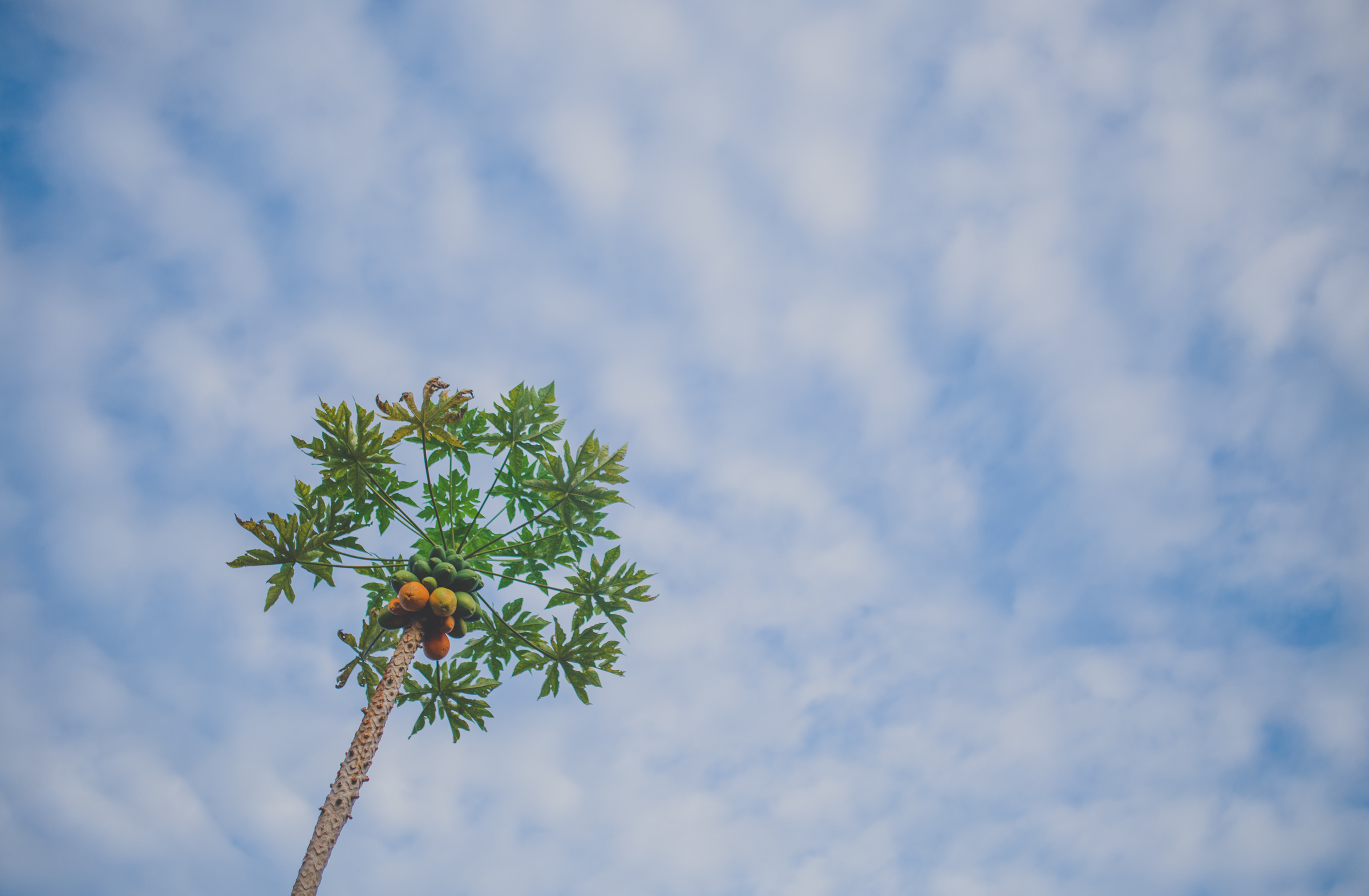IMG_3015--KAUAI-HAWAII-JENNIFER-PICARD-PHOTOGRAPHY.jpg