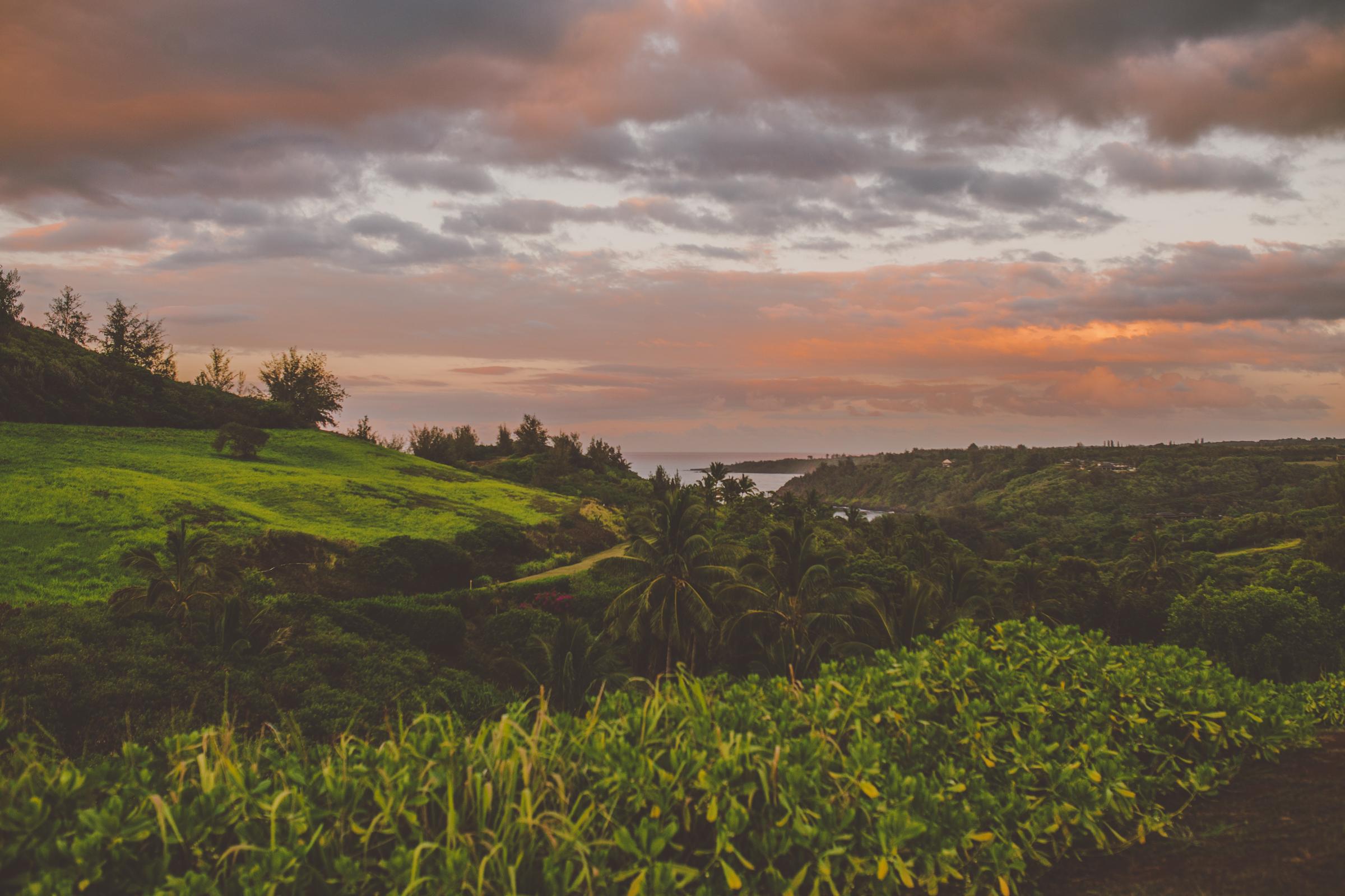 IMG_3487--KAUAI-HAWAII-JENNIFER-PICARD-PHOTOGRAPHY.jpg