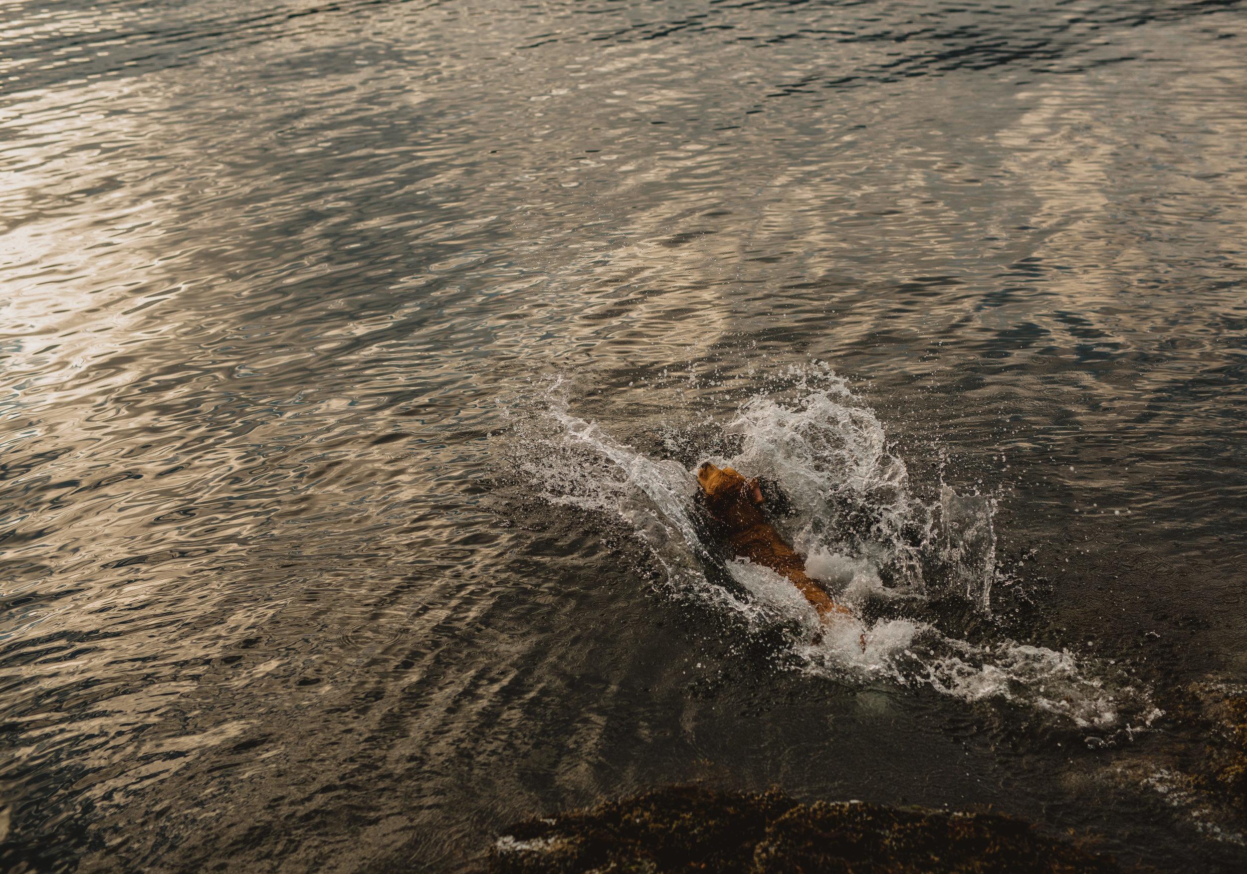 Keats Island Engagement Photos - Sunshine Coast Engagement Photos - Sunshine Coast Wedding Photographer - Vancovuer Wedding Photographer - Jennifer Picard Photography - IMG_0520.jpg