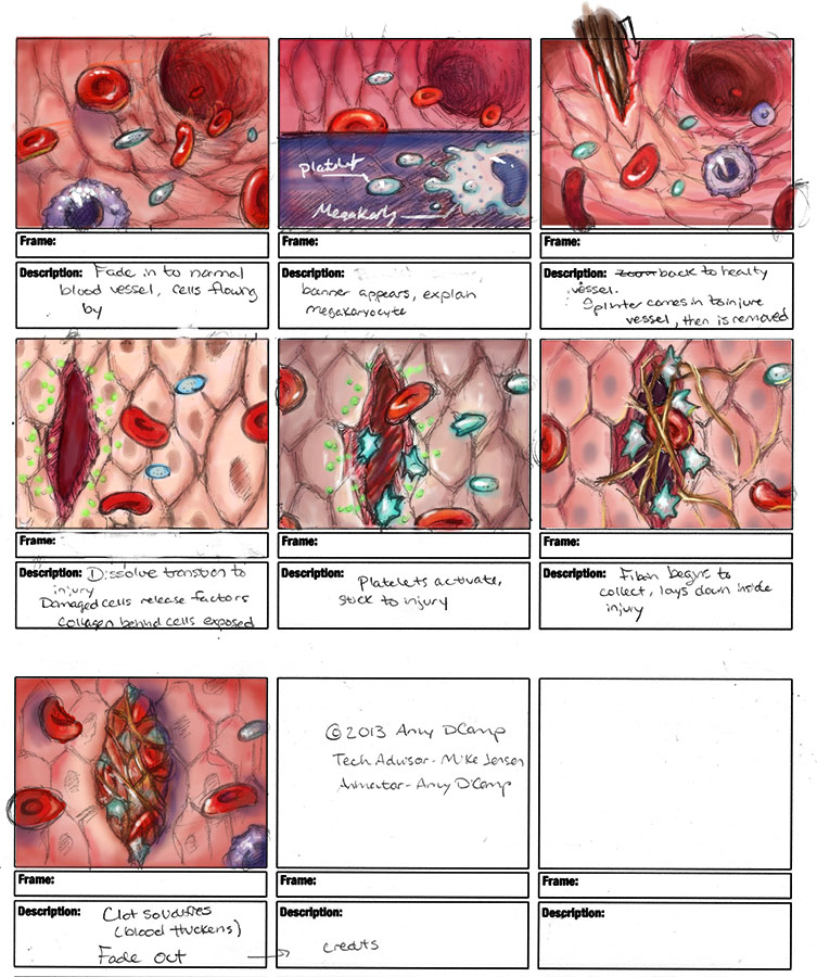 Storyboard- layout and color study for the 3D platelet animation.