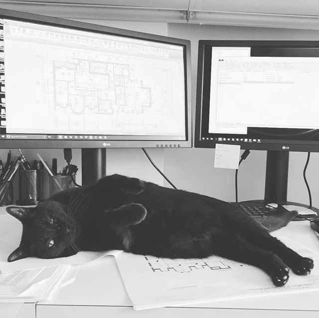 Summer Friday feelings. #architectureworkgrind #officecat