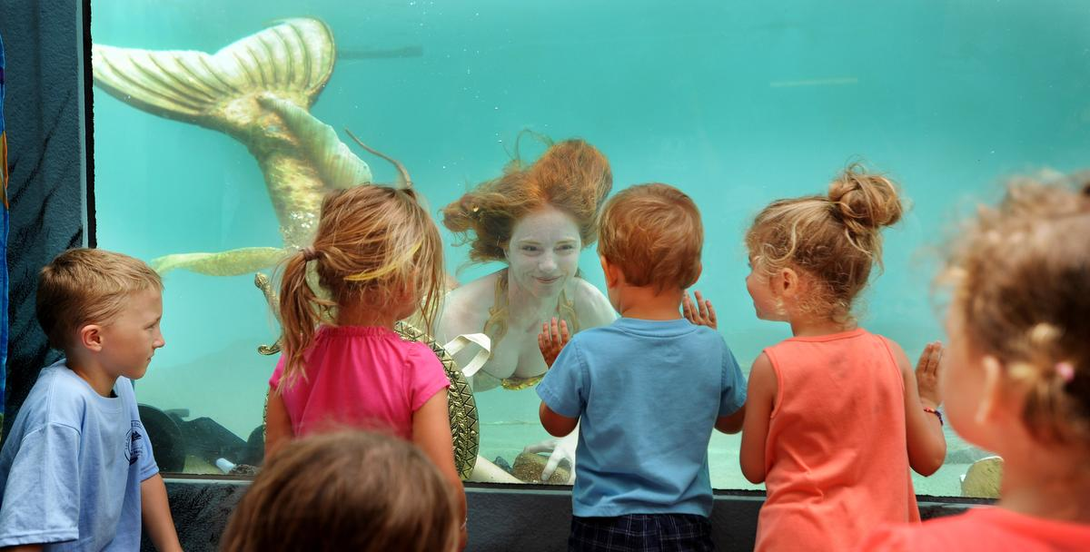 Catalina the mermaid folics around in the fish tank at the Ocean Institute 31st annual Tall Ships Festival on Saturday.