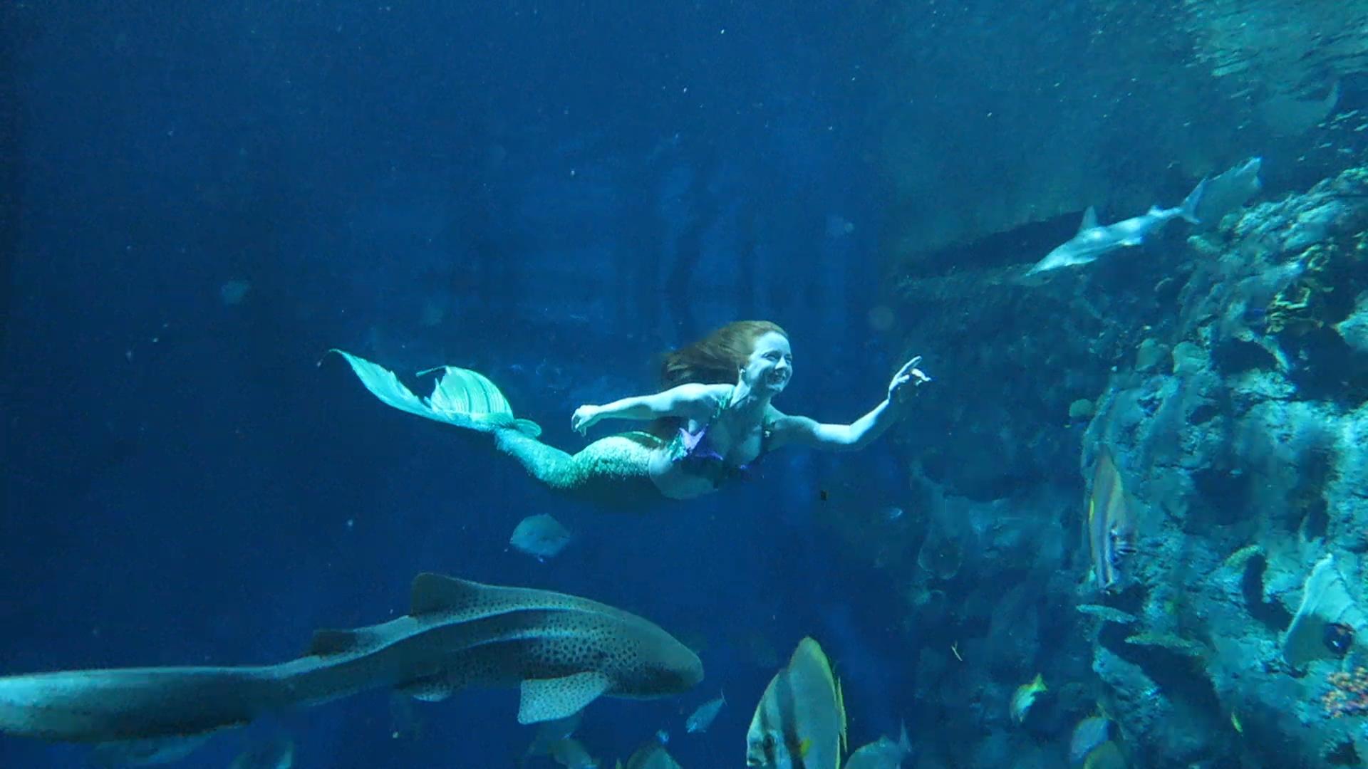 Catalina Mermaid Swimming with Sharks.jpg