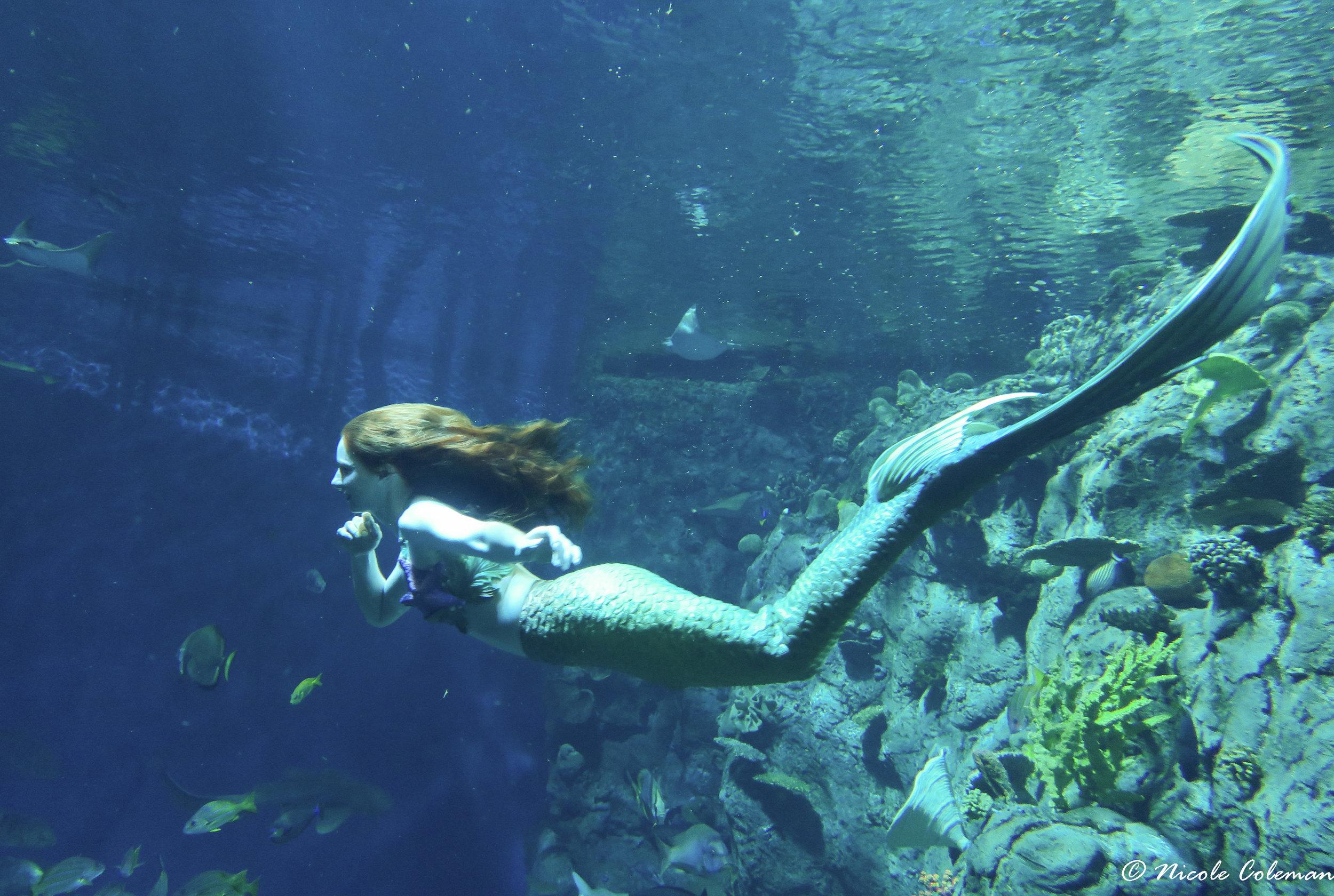 Catalina Mermaid at Aquarium of the Pacific.JPG