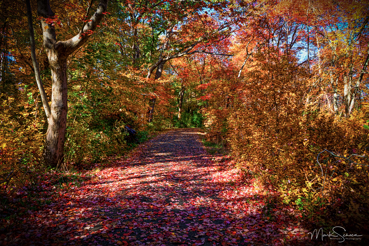 2015-10-26_08664-Edit-Edit.jpg