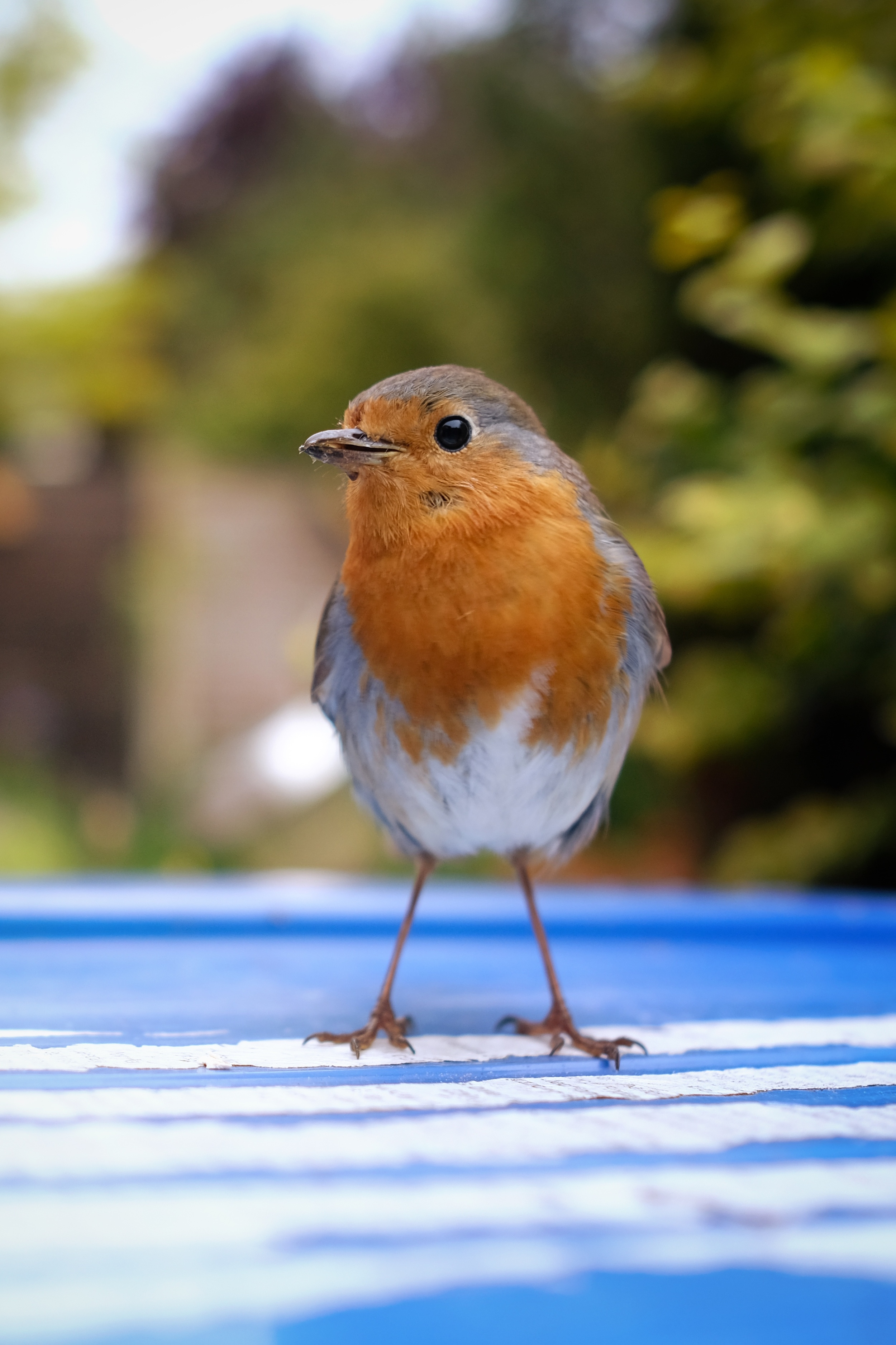 Robin Portrait 1.jpg