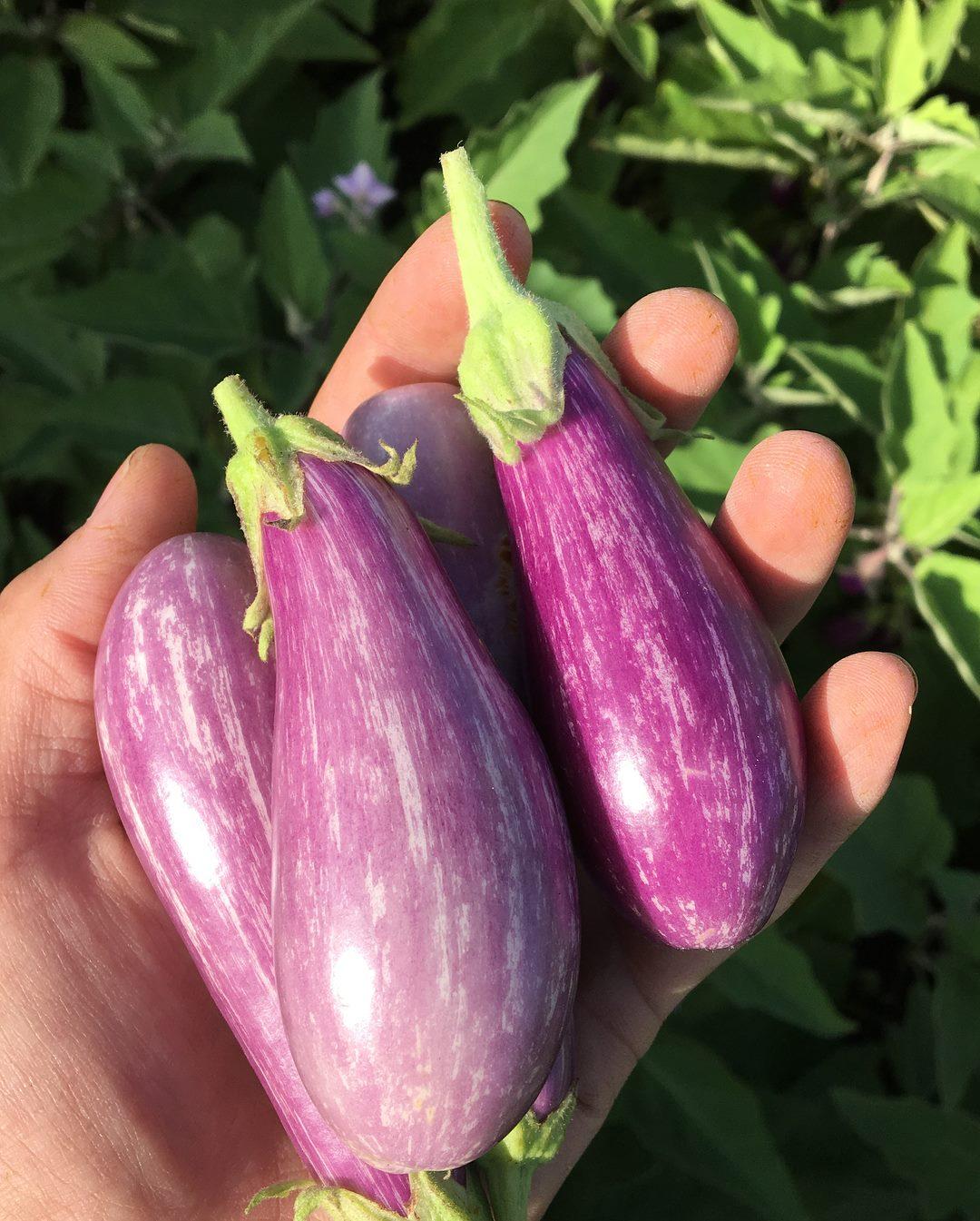 brooklyn_grange_eggplant.jpg