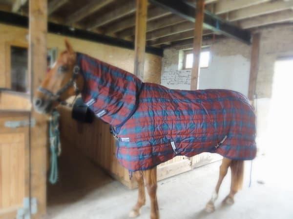 Nettoyage couverture cheval d'ecurie.JPG