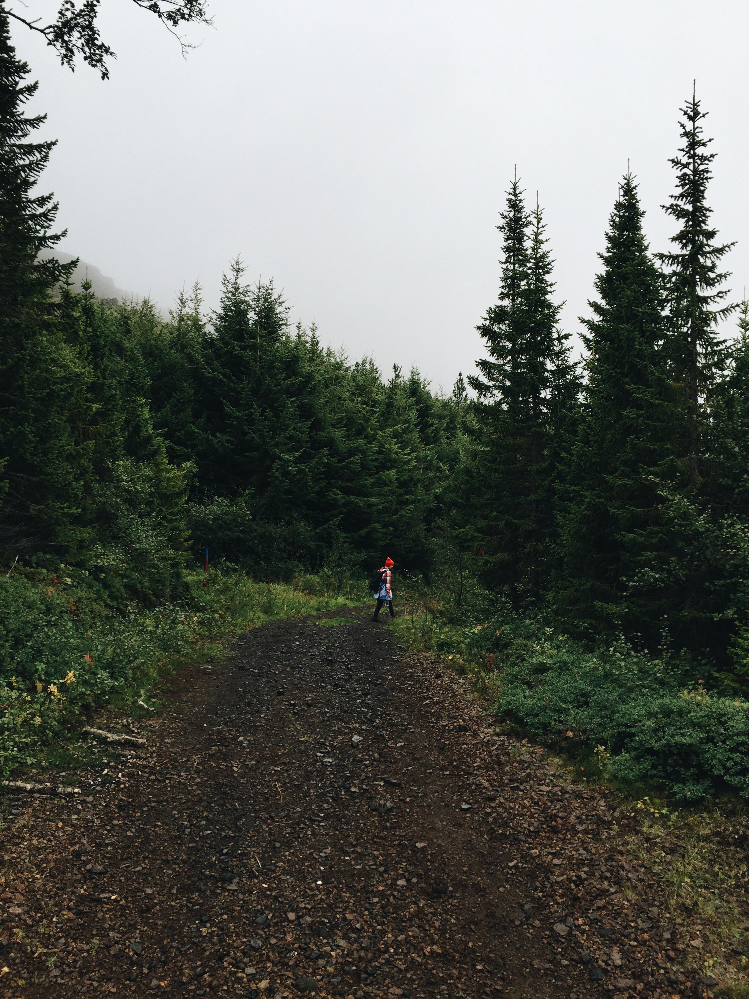 Hallormsstaður National Forest