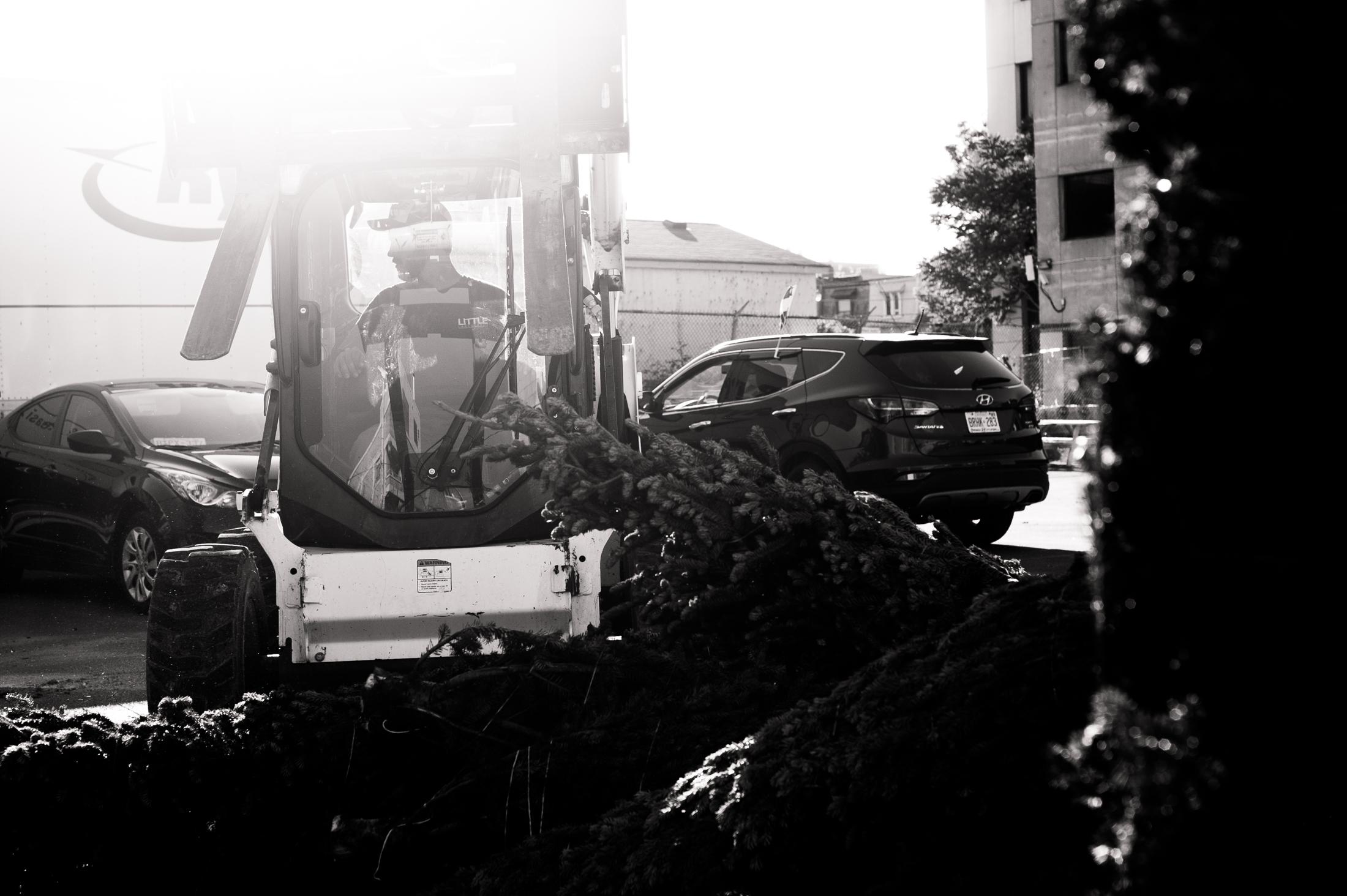 Trevor maneuvers the Trees via Bobcat.
